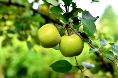 apple-3866387_1280